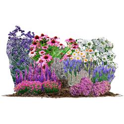 BCM Beetpflanze Bienen-& Schmetterlingsgarten Set, 18 Pflanzen