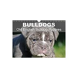 Bulldogs - Old English Bulldog Puppies (Wall Calendar 2021 DIN A4 Landscape)