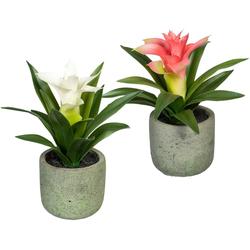 Künstliche Zimmerpflanze Set aus Guzmania in 2 Farben Guszmania, Creativ green, Höhe 17 cm, im Zementtopf, 2er Set weiß