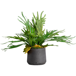 Kunstpflanze Staghorn, Blütenwerk, Höhe 55 cm