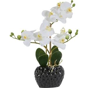 Kunstpflanze Orchidee Orchidee, Leonique, Höhe 38 cm weiß 13 cm x 38 cm x 6,5 cm