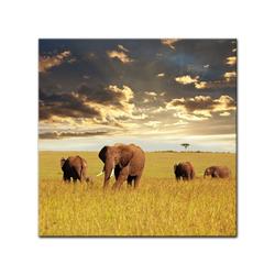 Bilderdepot24 Leinwandbild, Leinwandbild - Elefanten 60 cm x 60 cm