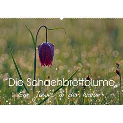 Die Schachbrettblume (Wandkalender 2021 DIN A2 quer)