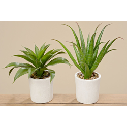 Kunstpflanze AGAVE(H 28 cm)