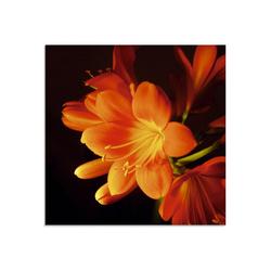 Artland Glasbild Clivie in leuchtendem Orange, Blumen (1 Stück) 20 cm x 20 cm