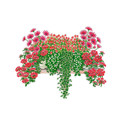 BCM Balkonpflanze Romantische Kombi Set, 9 Pflanzen