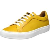 LLOYD Area yellow 44