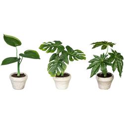 Künstliche Zimmerpflanze Set aus Grünpflanzen Grünpflanzen, Creativ green, Höhe 26 cm, im Zementtopf, 3er Set