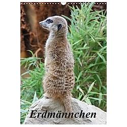 Erdmännchen (Wandkalender 2021 DIN A3 hoch)