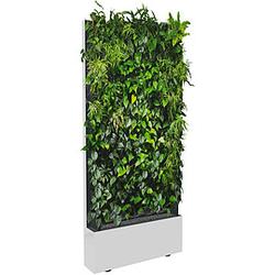 C+P Pflanzenwand auf Füßen, mit Trays für einseitige Bepflanzung, b100xt40xh232cm