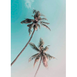 KOMAR XXL Poster Miami Palms bunt