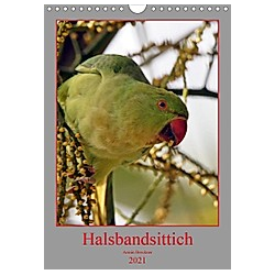 Halsbandsittich (Wandkalender 2021 DIN A4 hoch) - Kalender