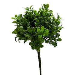 Buchsbaumbusch, 22 cm
