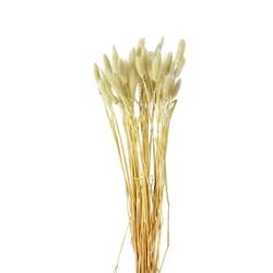 Kunstpflanze Lagurus (H 50 cm)