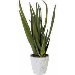 Creativ green Kunstpflanze Aloe grün Künstliche Zimmerpflanzen Kunstpflanzen Wohnaccessoires