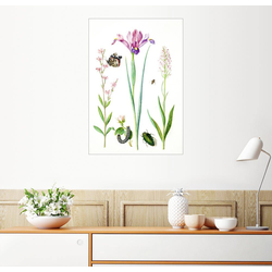 Posterlounge Wandbild, Pechnelke, Rose, Iris & Knabenkraut 60 cm x 80 cm