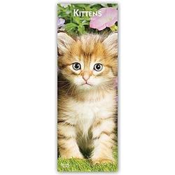 Kittens - Kätzchen Katzenbabys 2021