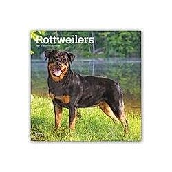 Rottweilers - Rottweiler 2021 - 16-Monatskalender mit freier DogDays-App