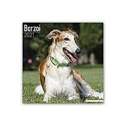 Borzoi - Russischer Wolfshund 2021