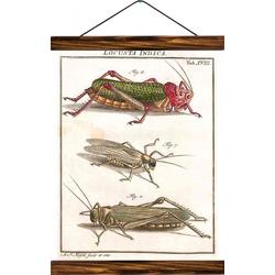 Vintage Lehrtafel - Cricket