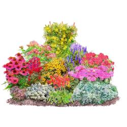 BCM Beetpflanze Vielfältiger Staudenreigen Set, 12 Pflanzen