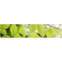Küchenrückwand fixy Buchenblätter grün 280 cm
