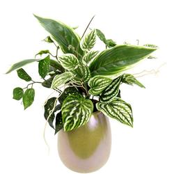 Kunstpflanze Mixed-Hostabusch in Vase Hostabusch, I.GE.A., Höhe 32 cm