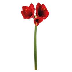 Kunstblume Amaryllis / Ritterstern Kunstpflanze Amaryllis, matches21 HOME & HOBBY, Höhe 66 cm rot