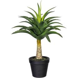 Künstliche Zimmerpflanze Aloe mit Stamm Aloe, Creativ green, Höhe 45 cm