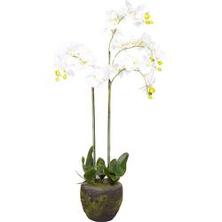 Kunstorchidee Orchidee Orchidee, Botanic-Haus, Höhe 110 cm