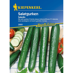Salatgurken Saladin, F1