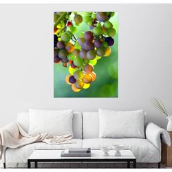 Posterlounge Wandbild, Weintrauben 100 cm x 130 cm