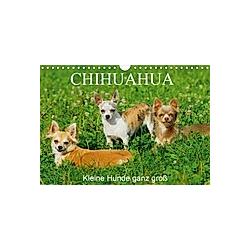 Chihuahua - Kleine Hunde ganz groß (Wandkalender 2021 DIN A4 quer)