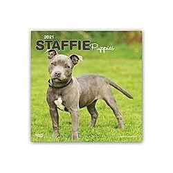 Staffordshire Bull Terrier Puppies - Staffordshire Bull Terrier Welpen 2021 - 16-Monatskalender mit freier DogDays-App