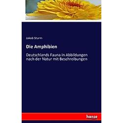 Die Amphibien. Jakob Sturm  - Buch