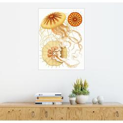 Posterlounge Wandbild, Polybostricha 60 cm x 80 cm