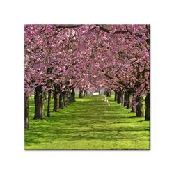 Bilderdepot24 Leinwandbild, Leinwandbild - Kirschblüten 60 cm x 60 cm