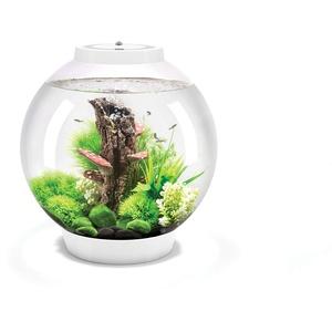 Oase biOrb CLASSIC 30 LED Kugel-Aquarium, 30 Liter - Aquarien Komplett-Set mit LED Beleuchtung und patentiertem Filter-System, Acryl-Becken