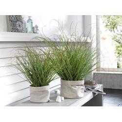 Kunstpflanze Zwiebelgras (H 69 cm) Casa Nova