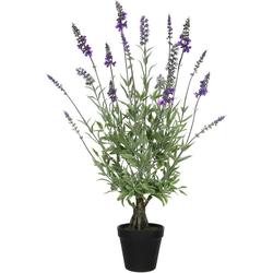 Künstliche Zimmerpflanze, Creativ green, Höhe 60 cm 60 cm