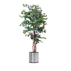PureDay Kunstpflanze, Ficus Benjamini