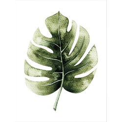 Wall-Art Poster Kvilis - Monstera Leaf