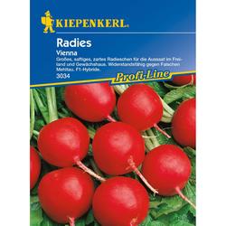 Radies / Radieschen Vienna, F1
