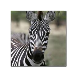 Bilderdepot24 Leinwandbild, Leinwandbild - Zebra - Portrait 80 cm x 80 cm