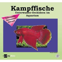 Kampffische als Buch von Frank Schäfer