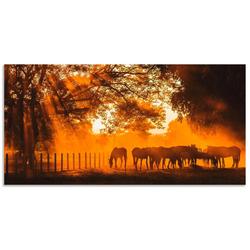 Artland Wandbild Goldenes Licht auf der Pferdewiese, Haustiere (1 Stück) 100 cm x 50 cm