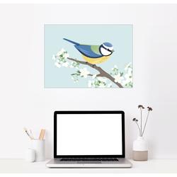 Posterlounge Wandbild, Blaumeise 90 cm x 70 cm