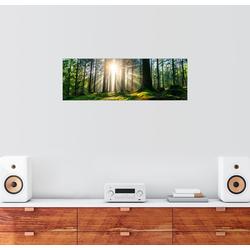 Posterlounge Wandbild, Sonnendurchfluteter Wald 150 cm x 50 cm