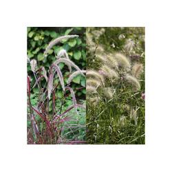 BCM Gräser Lampenputzergras Mix (2 Sorten) Spar-Set, Lieferhöhe ca. 40 cm, 2 Pflanzen