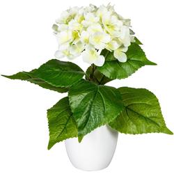 Künstliche Zimmerpflanze Leana Hortensie, my home, Höhe 40 cm weiß